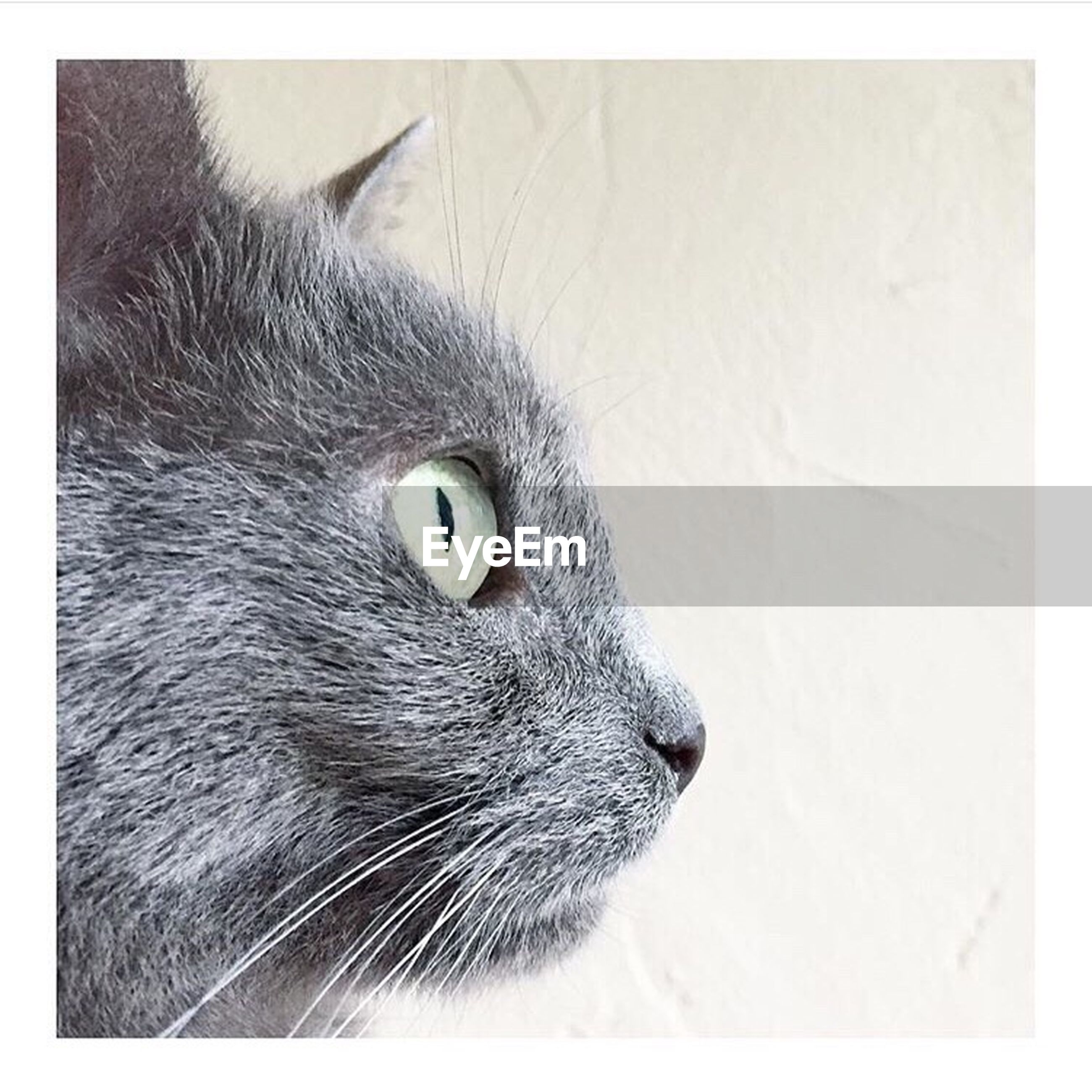 animal themes, domestic cat, cat, pets, feline, whisker, animal head, close-up, mammal, looking away, animal eye, animal body part, portrait, alertness, staring, no people, animal, focus on foreground, nature, selective focus