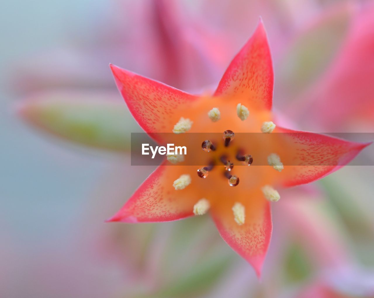 close-up, freshness, flowering plant, flower, beauty in nature, vulnerability, fragility, focus on foreground, petal, inflorescence, growth, flower head, no people, plant, nature, pollen, orange color, water, selective focus