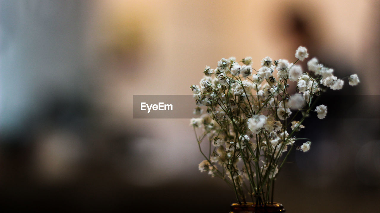flower, flowering plant, beauty in nature, plant, close-up, growth, nature, fragility, selective focus, vulnerability, focus on foreground, freshness, day, no people, outdoors, white color, flower head, tranquility, sunlight, inflorescence, bunch of flowers, flower arrangement
