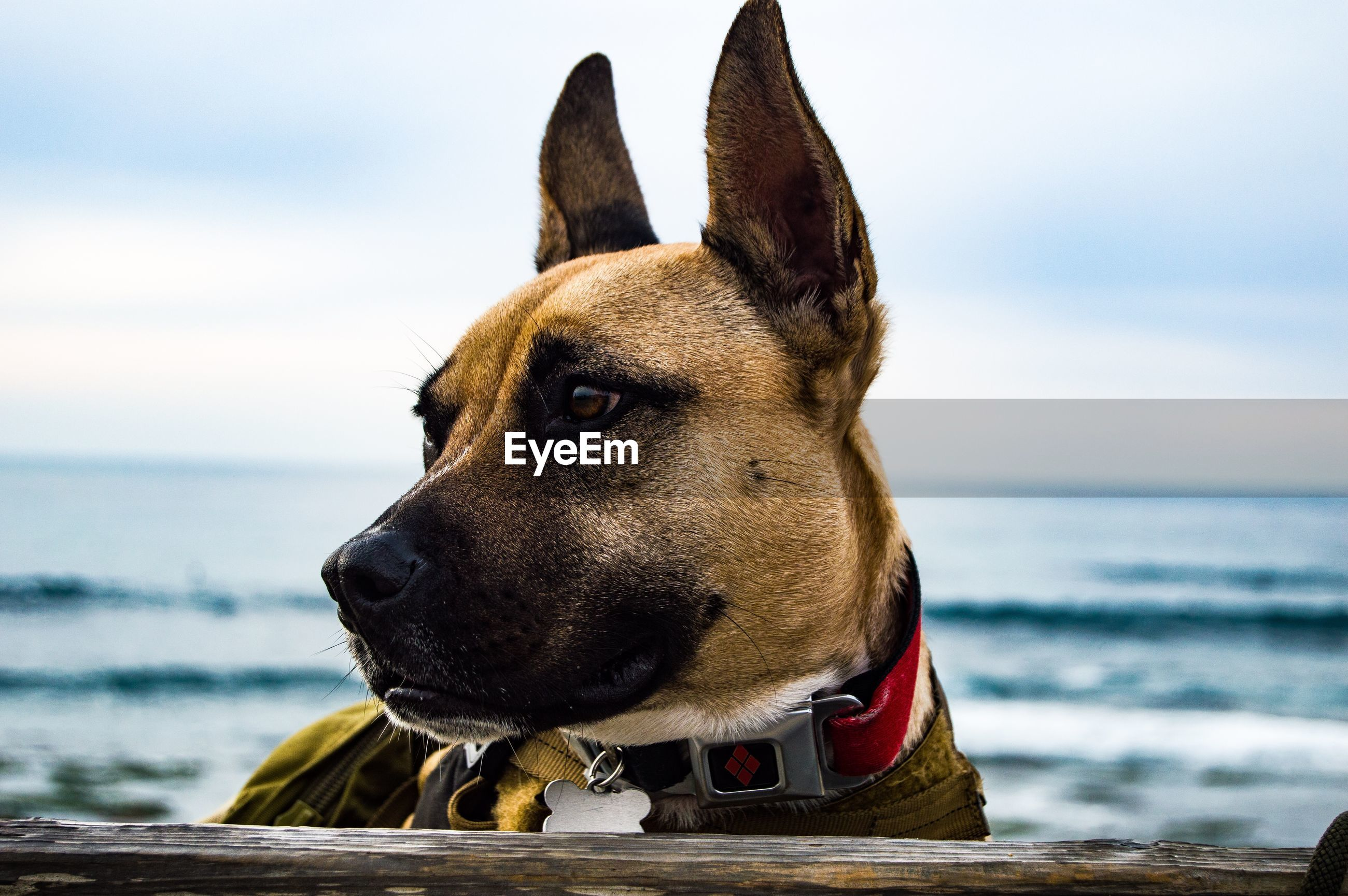 CLOSE-UP OF A DOG AGAINST THE SEA