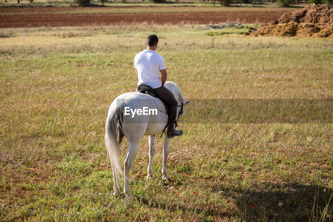 REAR VIEW OF MAN RIDING HORSE IN FIELD