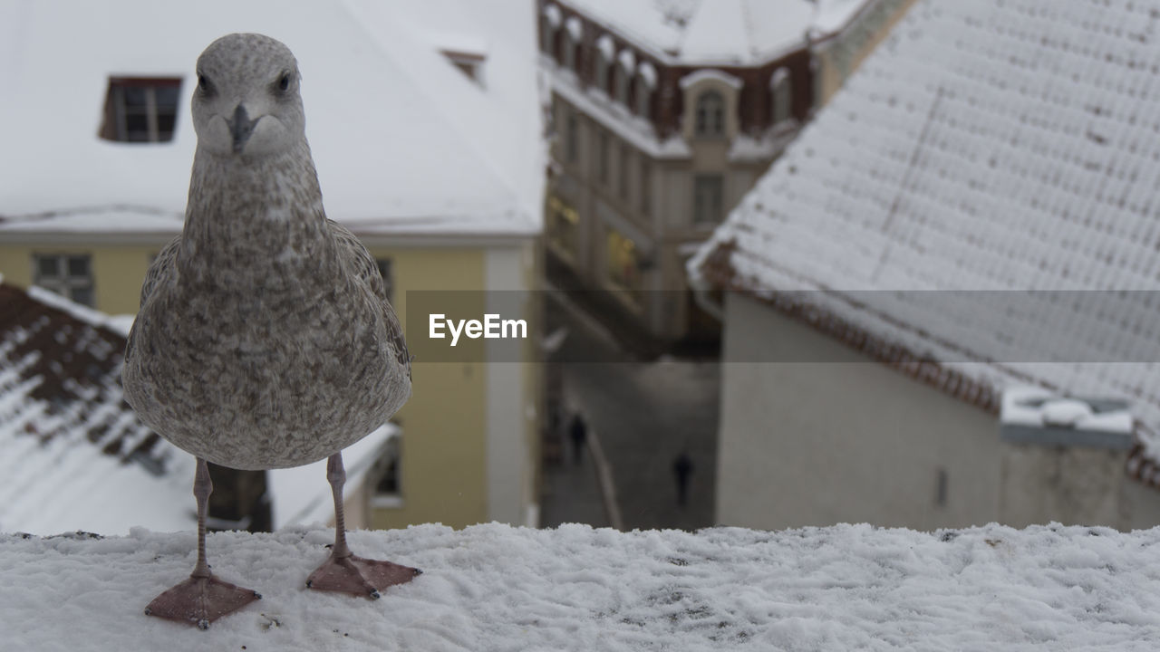 bird, winter, cold temperature, vertebrate, snow, architecture, animal, animal themes, focus on foreground, built structure, no people, one animal, animals in the wild, nature, building exterior, day, animal wildlife, building, outdoors
