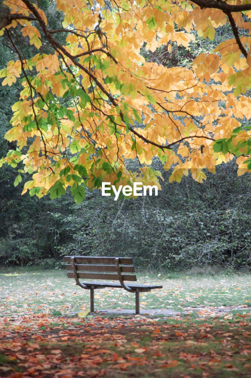 tree, autumn, plant, seat, bench, plant part, leaf, change, park, beauty in nature, nature, park - man made space, park bench, tranquility, absence, day, tranquil scene, outdoors, no people, orange color
