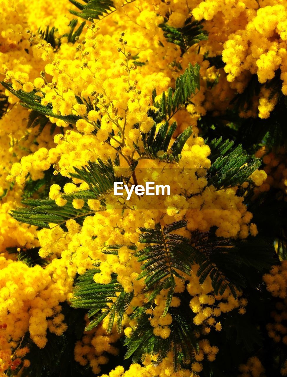 growth, yellow, freshness, flower, nature, no people, beauty in nature, fragility, close-up, day, outdoors, tree