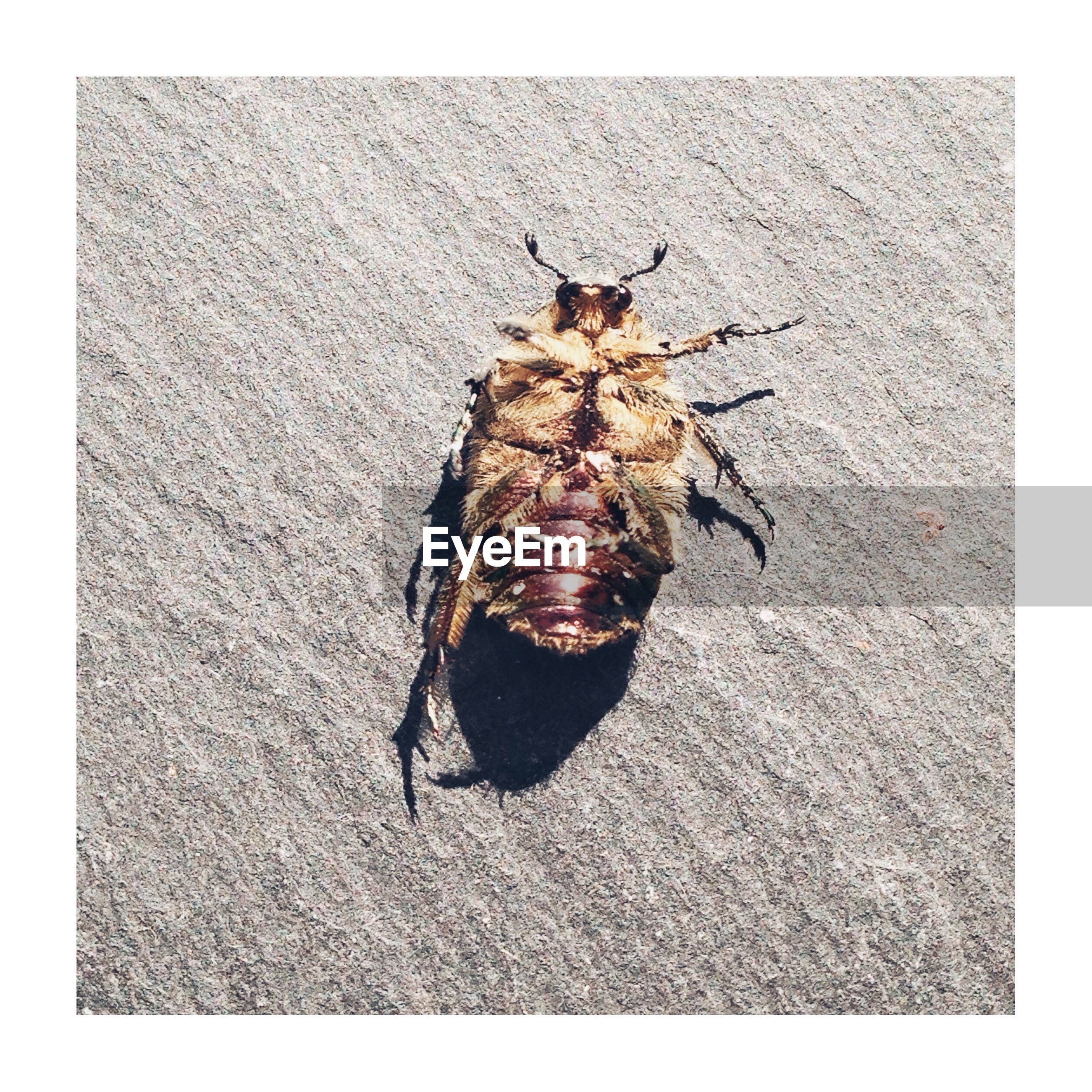transfer print, animal themes, animal, auto post production filter, insect, animals in the wild, one animal, animal wildlife, invertebrate, close-up, no people, nature, day, directly above, outdoors, full length, high angle view, sunlight, arthropod