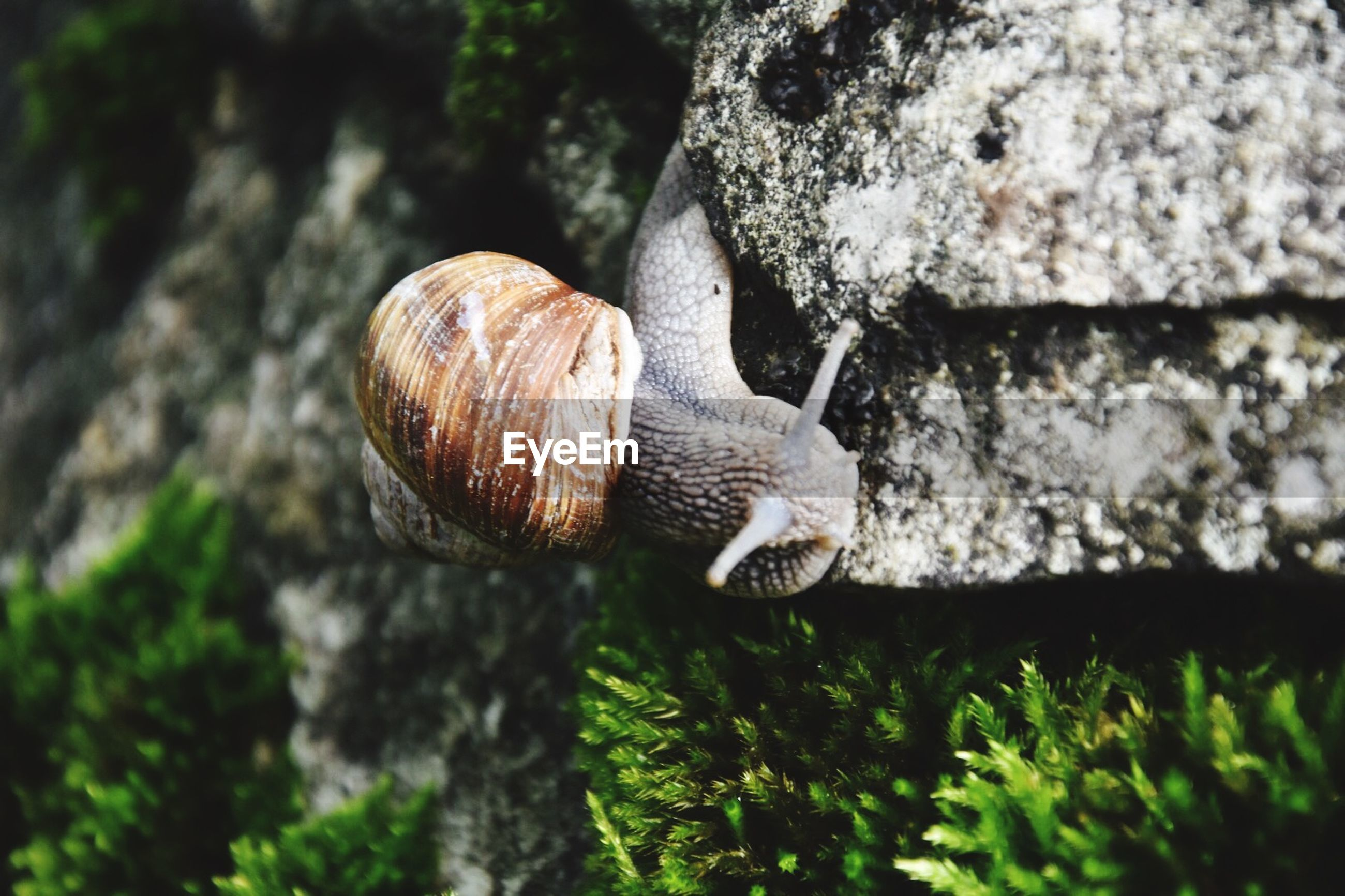 grass, close-up, focus on foreground, field, selective focus, nature, snail, animal shell, growth, mushroom, textured, green color, day, outdoors, wildlife, one animal, animal themes, moss, animals in the wild, tree trunk
