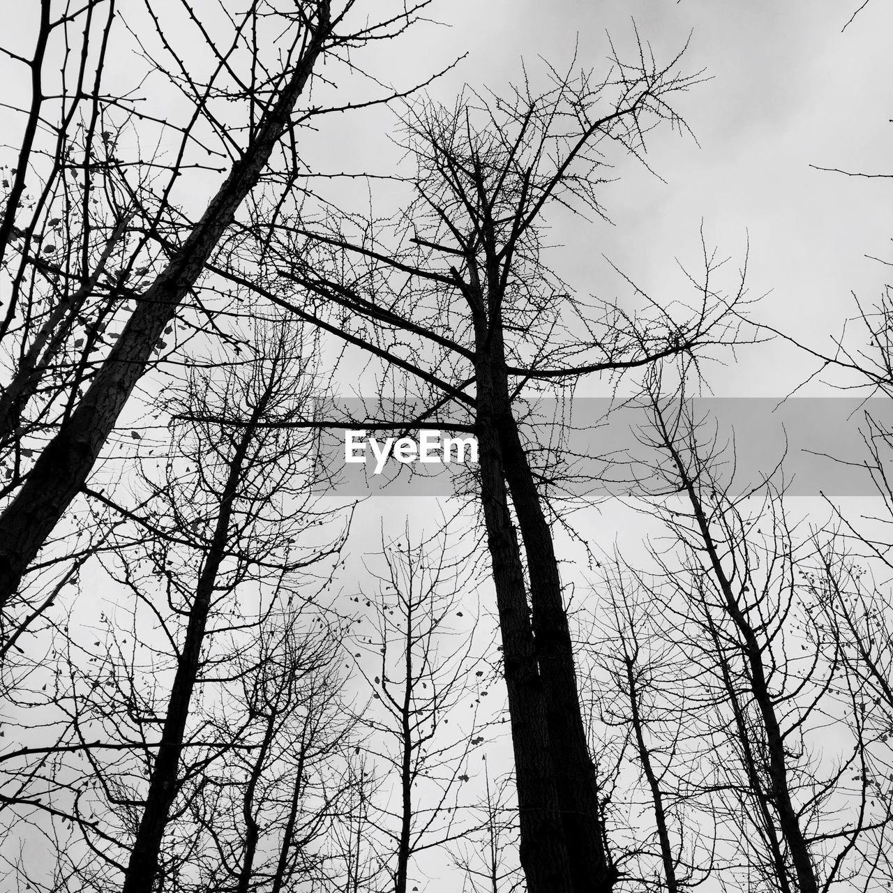tree, bare tree, low angle view, branch, nature, no people, beauty in nature, day, sky, tranquility, outdoors, tree trunk, growth