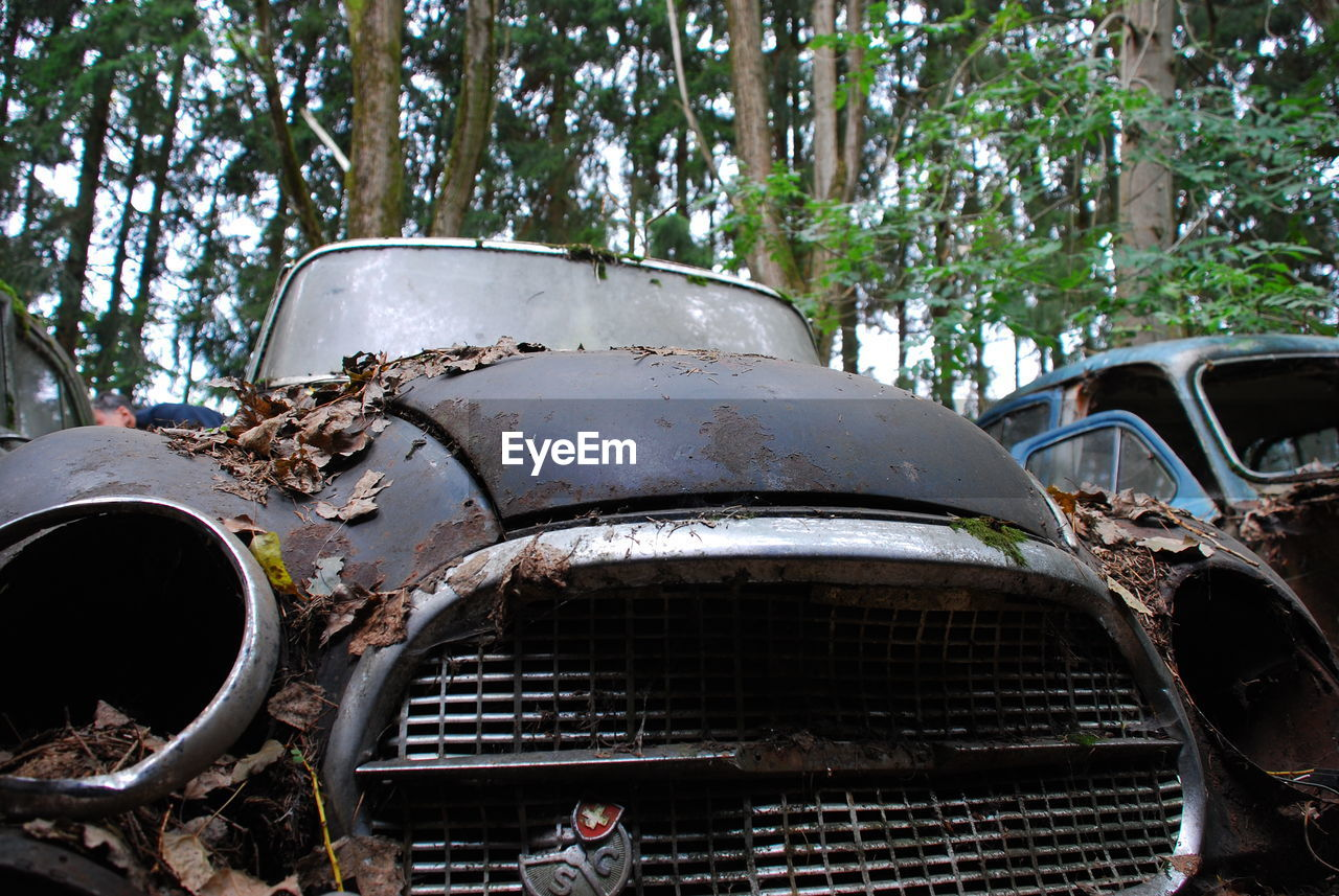 mode of transportation, transportation, car, motor vehicle, damaged, abandoned, rusty, tree, day, metal, land vehicle, obsolete, run-down, decline, deterioration, plant, old, bad condition, nature, ruined, no people, outdoors, junkyard