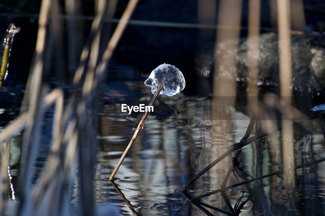 water, cold temperature, frozen, ice, winter, reflection, day, no people, nature, outdoors, lake, fragility, snow, close-up, beauty in nature