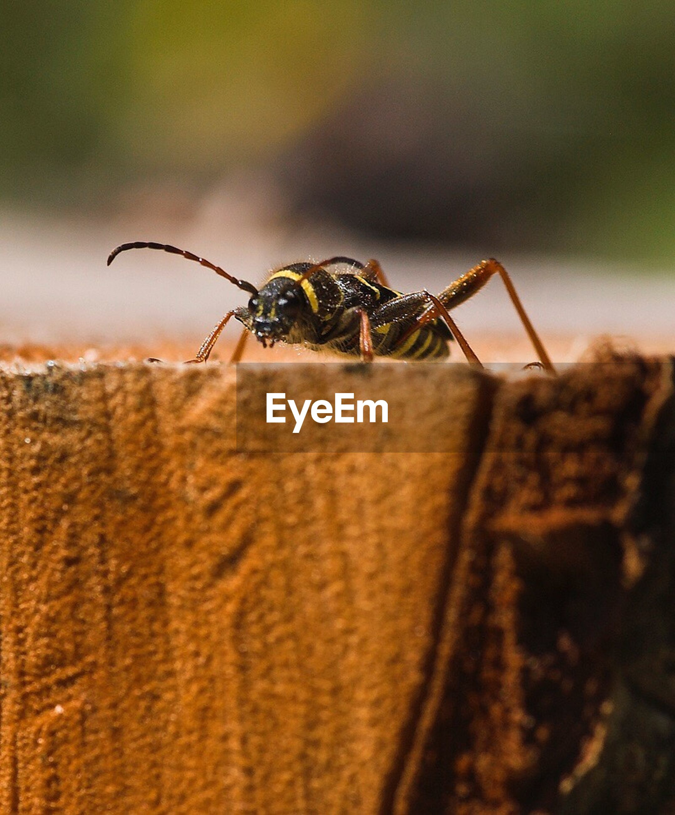 animal themes, animals in the wild, one animal, insect, wildlife, close-up, focus on foreground, selective focus, zoology, animal head, extreme close-up, brown, invertebrate, green color, nature, arthropod, animal eye, no people