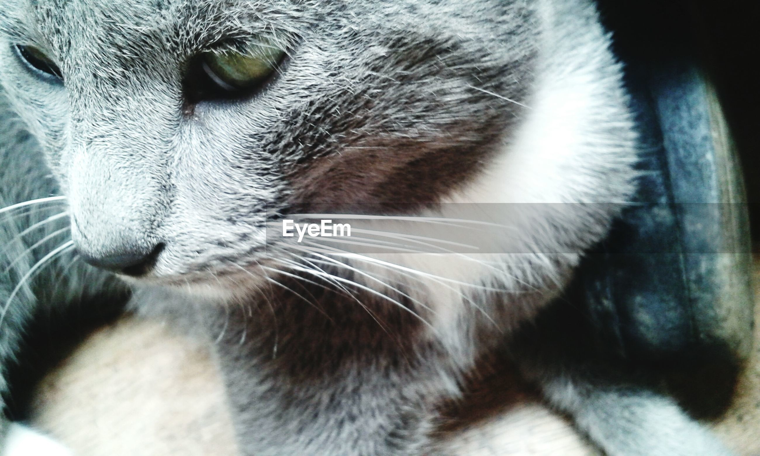 domestic cat, one animal, pets, domestic animals, feline, animal themes, mammal, cat, whisker, no people, close-up, animal head, portrait, day, indoors, nature