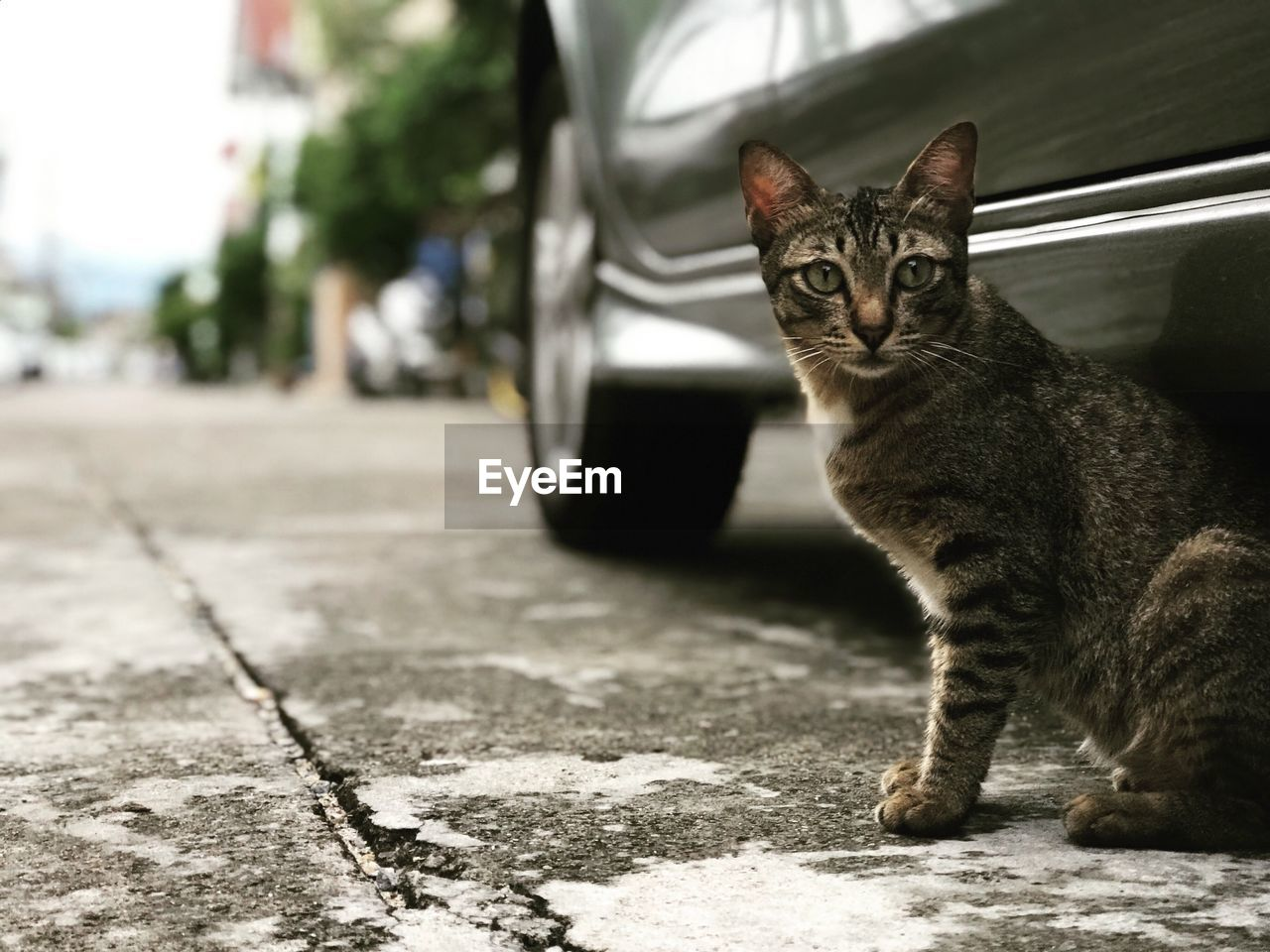 domestic cat, cat, one animal, animal themes, feline, mammal, pets, domestic, animal, domestic animals, vertebrate, focus on foreground, street, city, looking at camera, day, portrait, no people, whisker, footpath