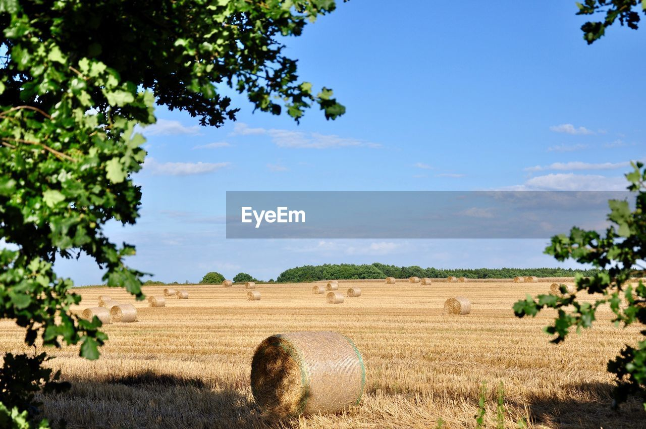 tree, field, agriculture, tranquility, nature, rural scene, tranquil scene, day, bale, landscape, sky, no people, beauty in nature, scenics, outdoors, hay bale