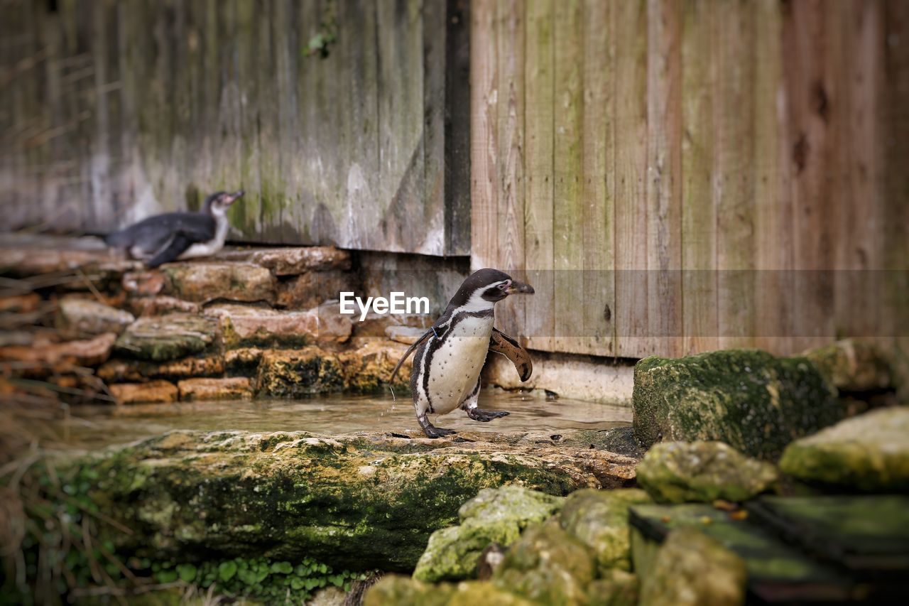 animal themes, animal, animal wildlife, vertebrate, animals in the wild, bird, solid, group of animals, rock, rock - object, wood - material, day, no people, selective focus, nature, perching, outdoors, side view, focus on foreground