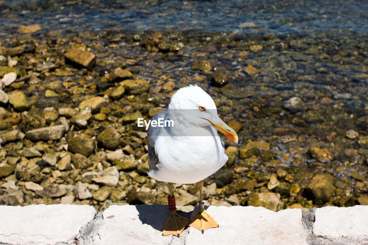 animal themes, animal, animals in the wild, bird, animal wildlife, vertebrate, water, one animal, solid, white color, rock, nature, day, rock - object, focus on foreground, no people, sea, beach, sunlight, seagull