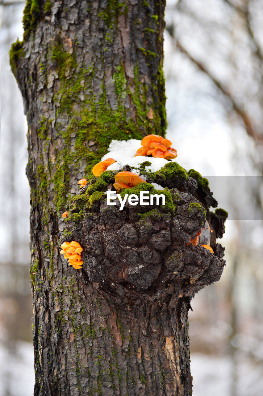 tree trunk, tree, nature, animal themes, focus on foreground, woodpecker, animals in the wild, animal wildlife, bark, one animal, day, no people, perching, textured, lichen, outdoors, rough, wood - material, growth, close-up, tree stump, beauty in nature, bird
