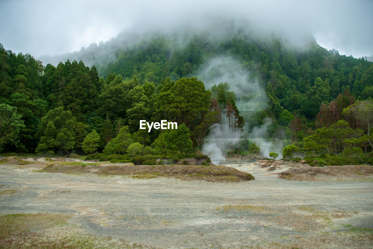 tree, beauty in nature, plant, non-urban scene, mountain, no people, day, nature, environment, smoke - physical structure, scenics - nature, steam, landscape, water, geology, power in nature, power, hot spring, land, sky, outdoors