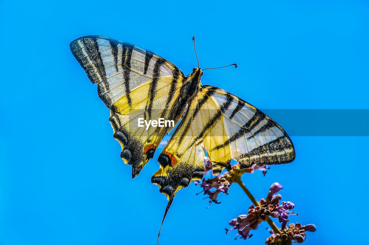 Close-Up Of Butterfly Pollinating On Flower Against Clear Blue Sky