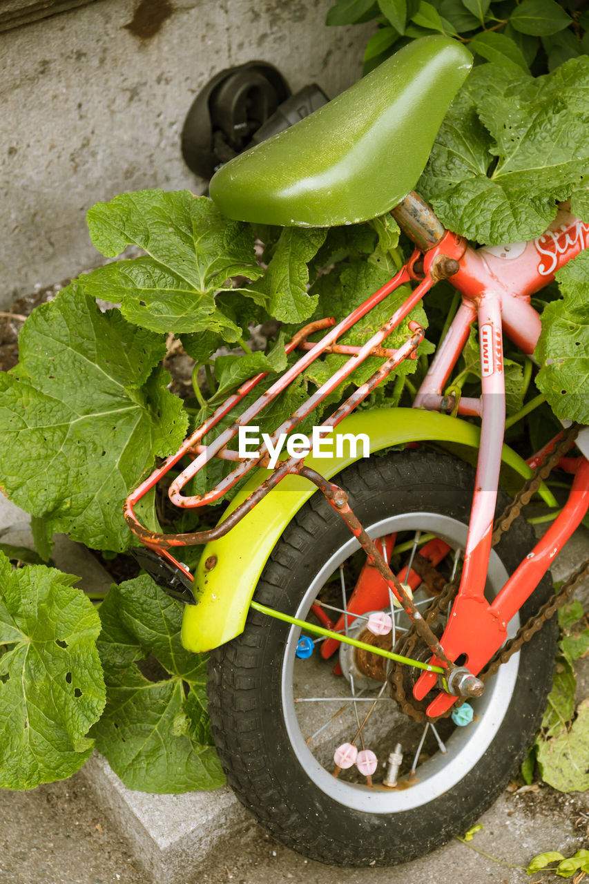 leaf, plant, no people, plant part, growth, green color, close-up, day, nature, bicycle, transportation, food, vegetable, food and drink, freshness, outdoors, mode of transportation, high angle view, wheel, land vehicle, gardening, tire