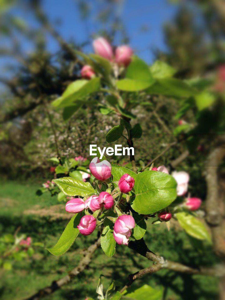 growth, beauty in nature, nature, flower, freshness, green color, fragility, pink color, outdoors, focus on foreground, day, close-up, no people, plant, leaf, petal, tree, branch, flower head
