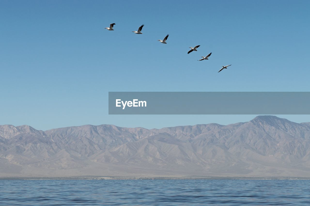 Birds flying over lake against clear sky