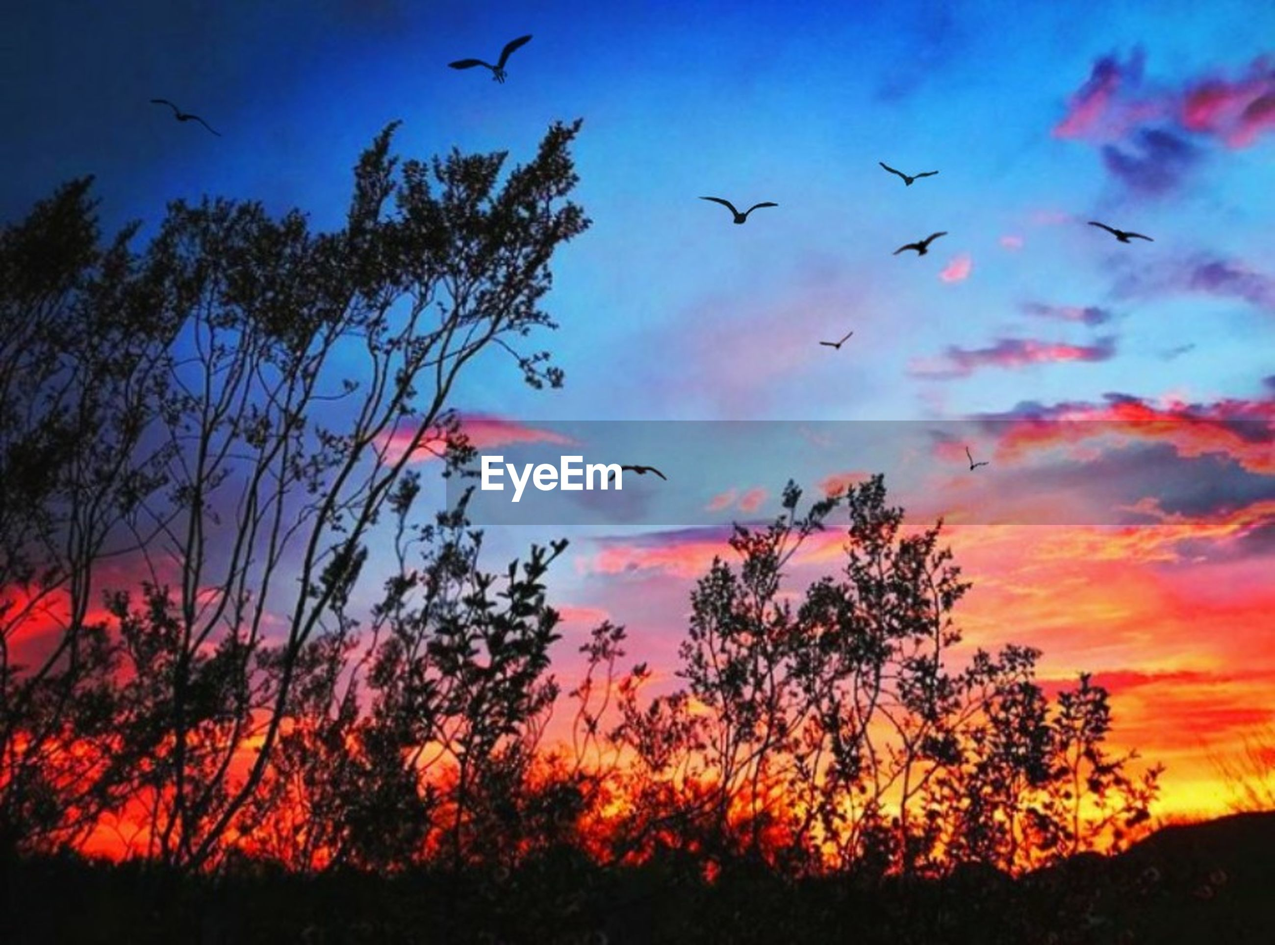 sky, flying, animal themes, vertebrate, animal wildlife, animals in the wild, cloud - sky, animal, bird, tree, sunset, plant, beauty in nature, nature, group of animals, large group of animals, scenics - nature, no people, silhouette, orange color, flock of birds, outdoors