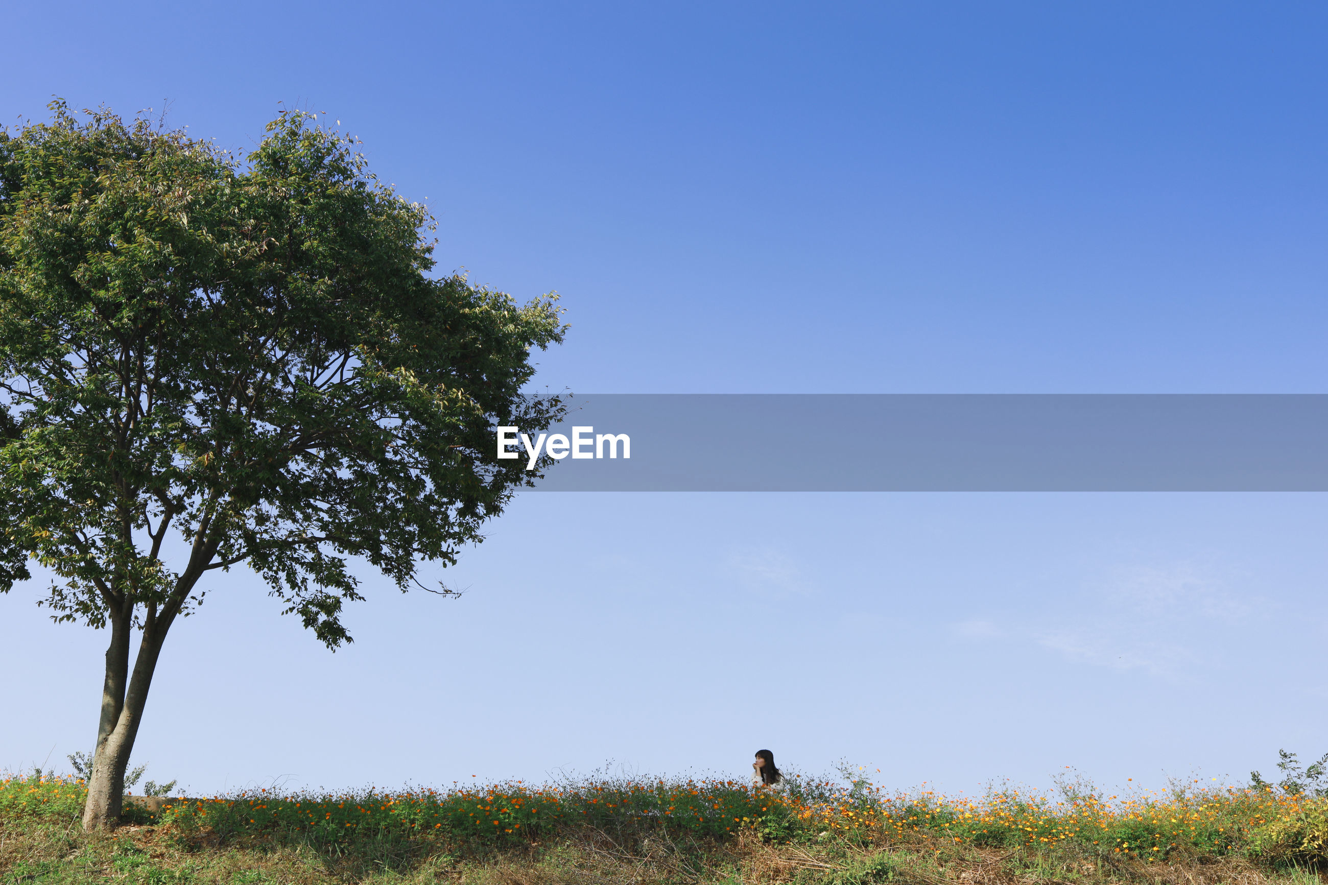 Woman on field by tree against clear blue sky