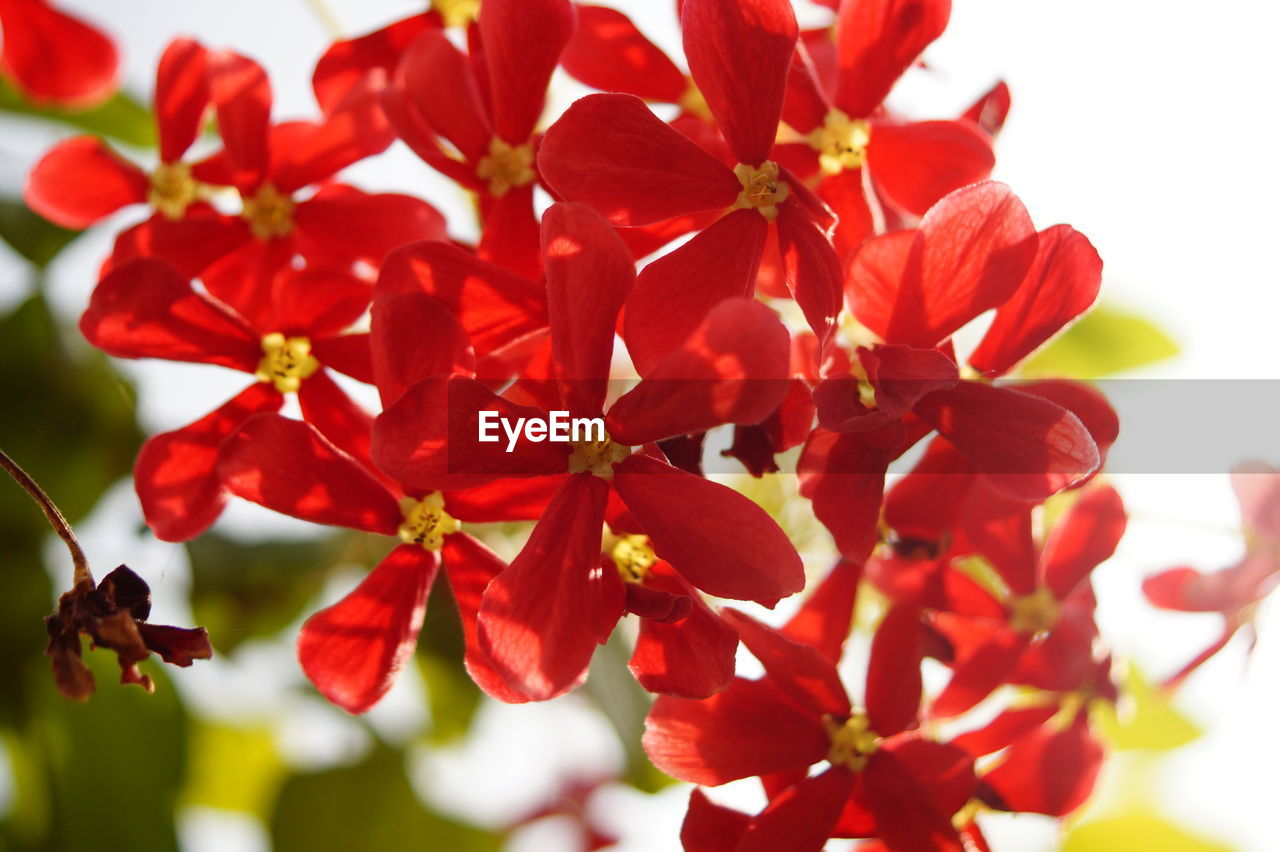 growth, flower, beauty in nature, nature, fragility, petal, red, close-up, day, freshness, no people, outdoors, flower head