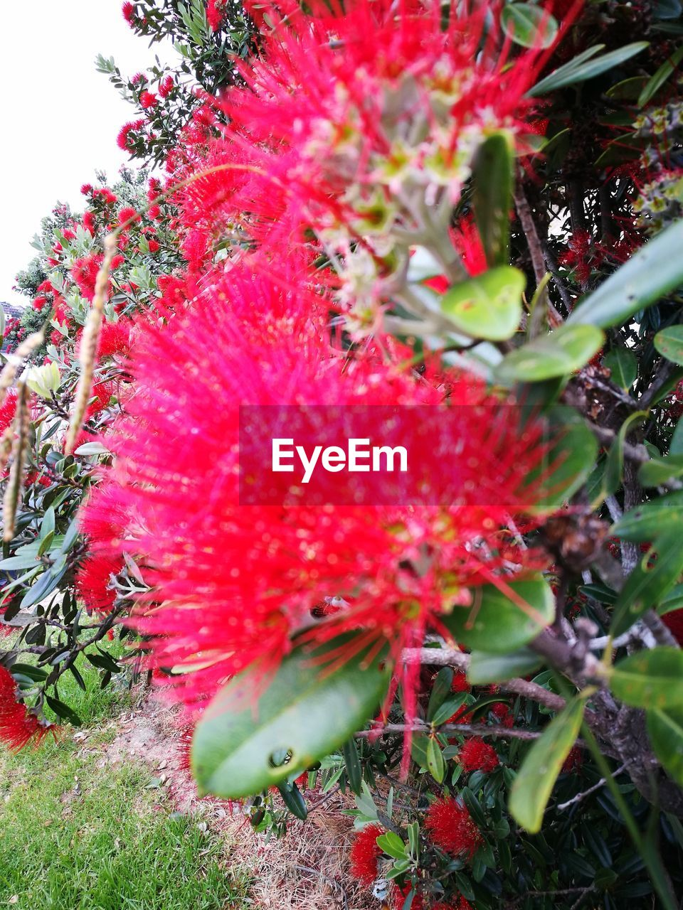 growth, red, nature, day, outdoors, beauty in nature, no people, plant, green color, freshness, fragility, flower, close-up, tree