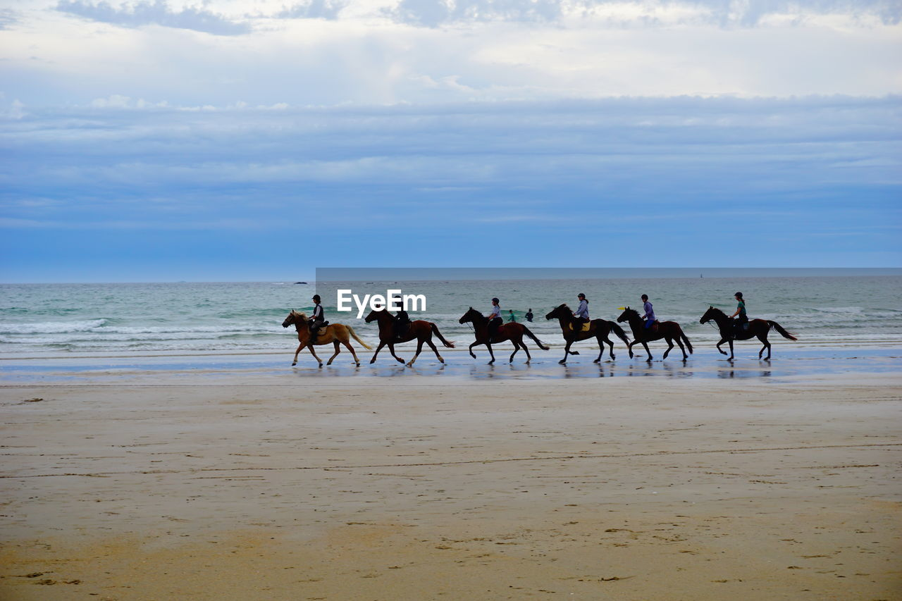 VIEW OF HORSES ON BEACH