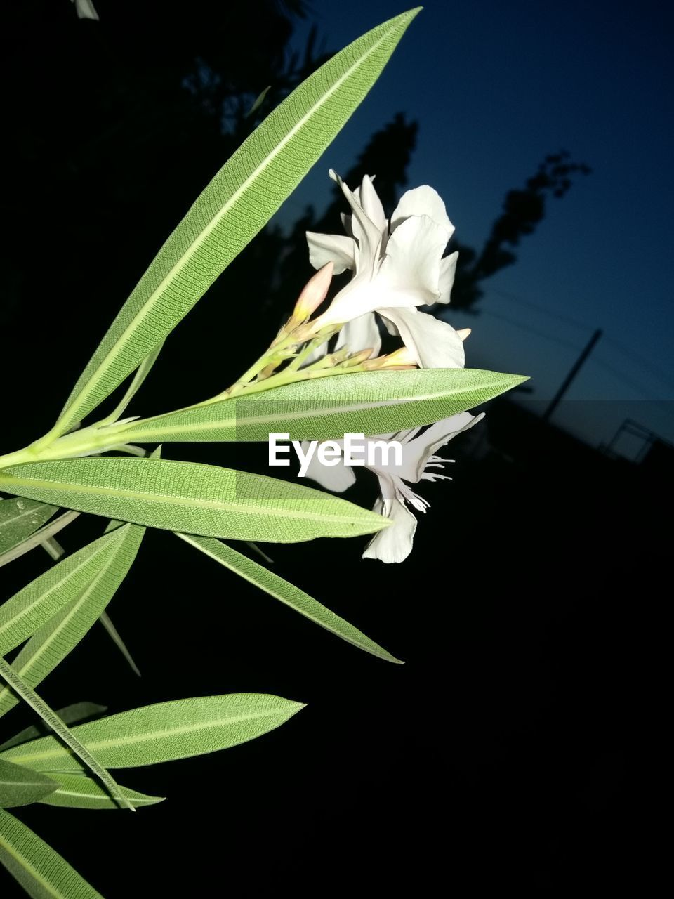 growth, plant, nature, leaf, green color, beauty in nature, no people, close-up, flower, freshness, fragility, outdoors, day, flower head