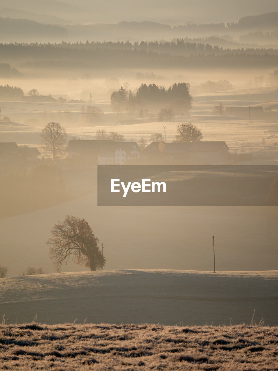 tree, tranquil scene, scenics - nature, plant, beauty in nature, fog, tranquility, sky, nature, no people, land, non-urban scene, water, landscape, environment, cloud - sky, field, day, outdoors, hazy