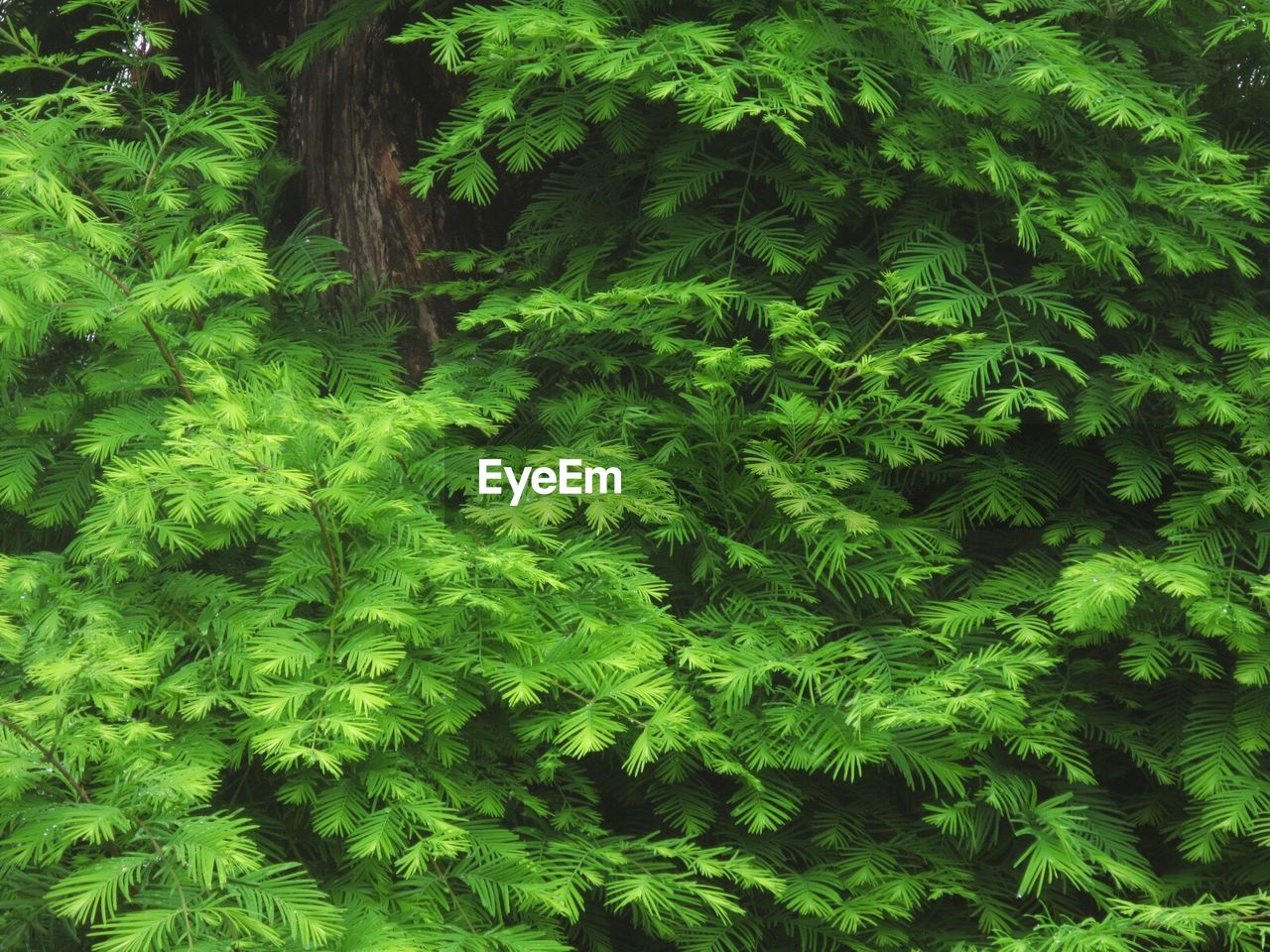 green color, growth, nature, plant, beauty in nature, no people, fern, tree, day, outdoors, close-up, freshness