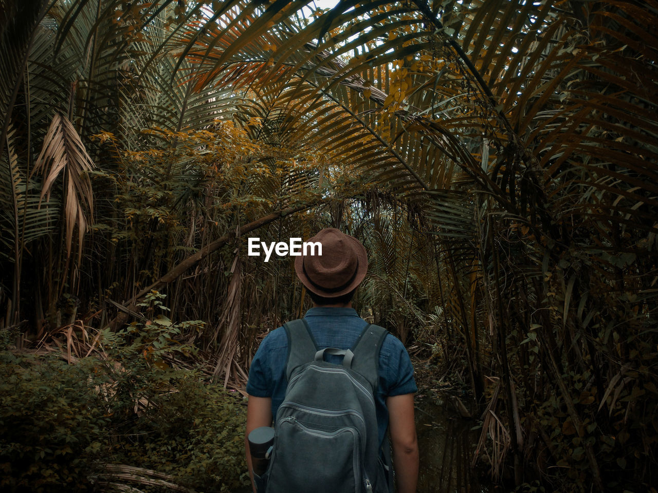 plant, tree, growth, one person, real people, rear view, waist up, standing, palm tree, lifestyles, tropical climate, leisure activity, nature, casual clothing, men, day, land, three quarter length, walking, outdoors