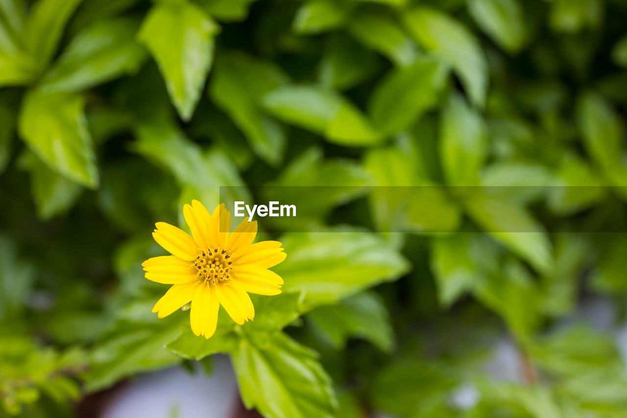 flowering plant, flower, plant, yellow, freshness, fragility, vulnerability, beauty in nature, growth, petal, flower head, close-up, inflorescence, green color, nature, selective focus, no people, day, plant part, leaf, pollen