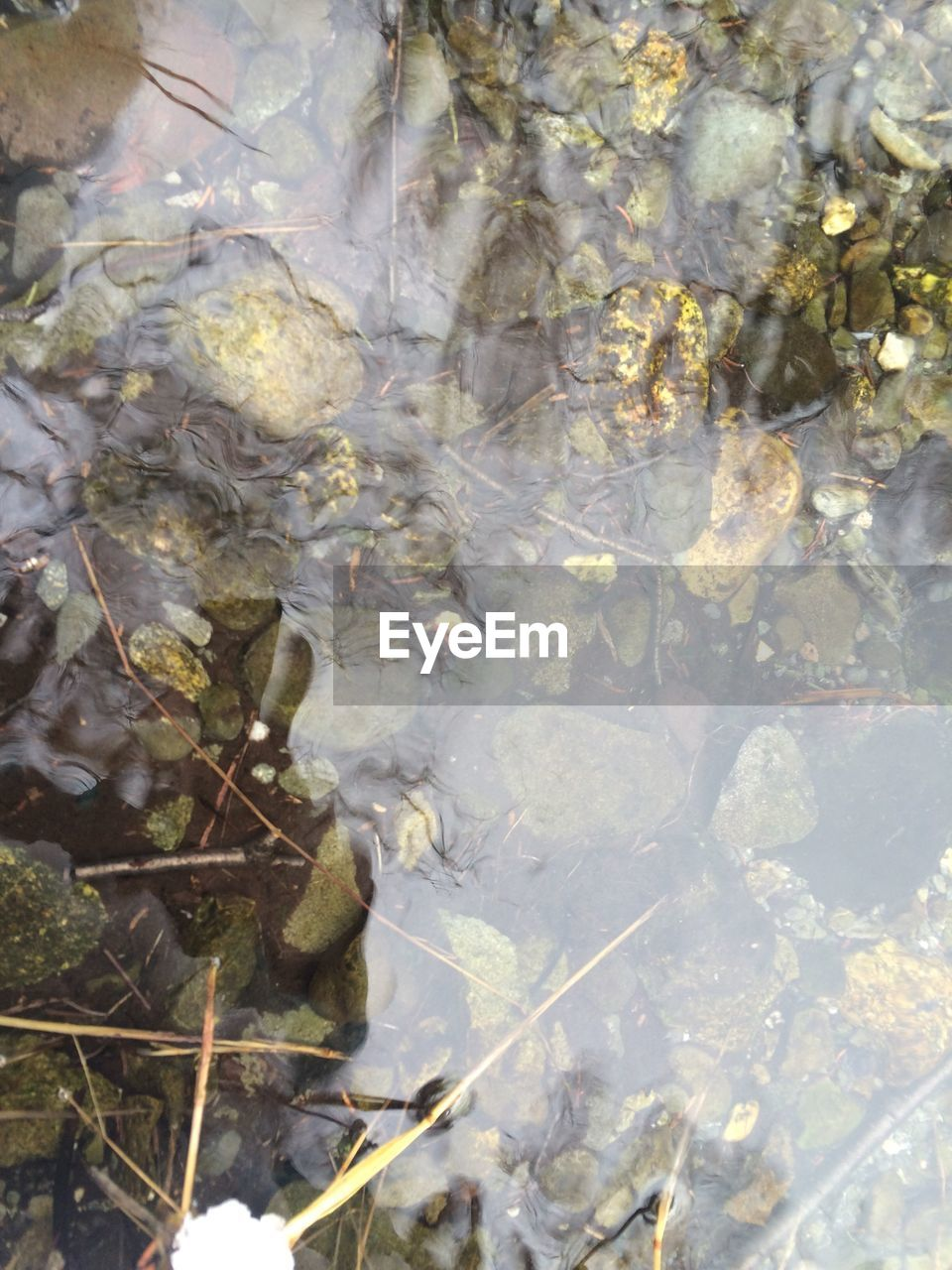 no people, full frame, nature, day, close-up, outdoors, water, freshness