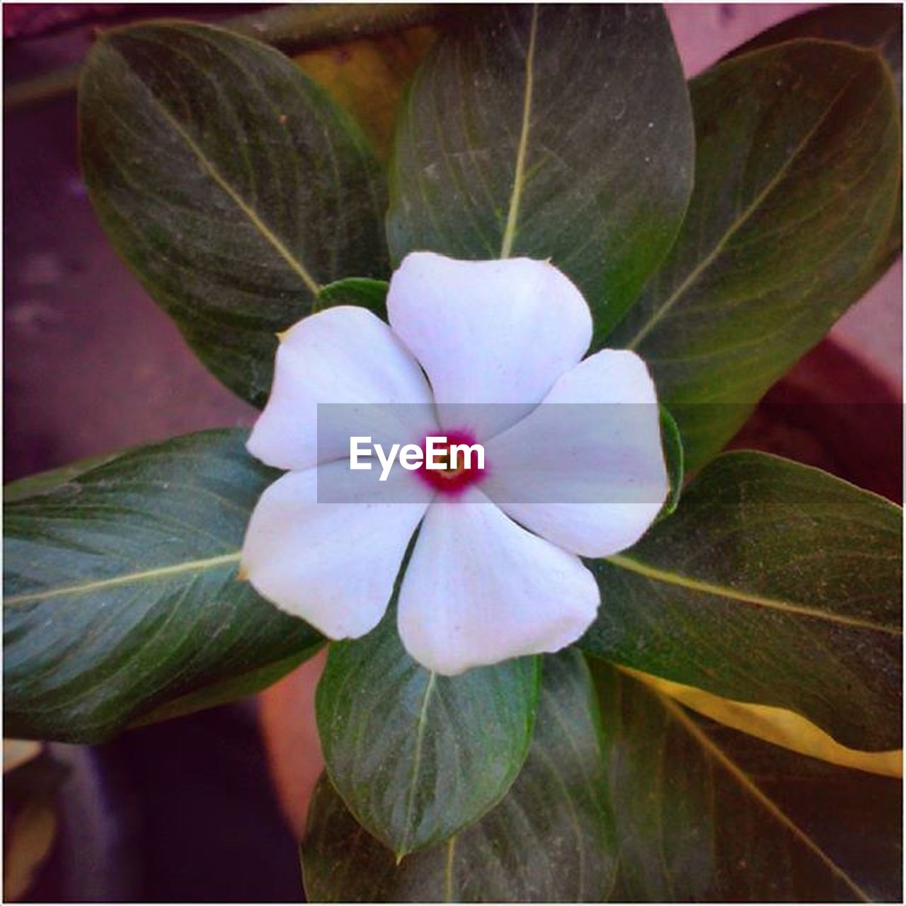 plant, flower, flowering plant, freshness, close-up, beauty in nature, vulnerability, petal, fragility, inflorescence, growth, flower head, plant part, leaf, no people, nature, focus on foreground, day, botany, pollen, purple