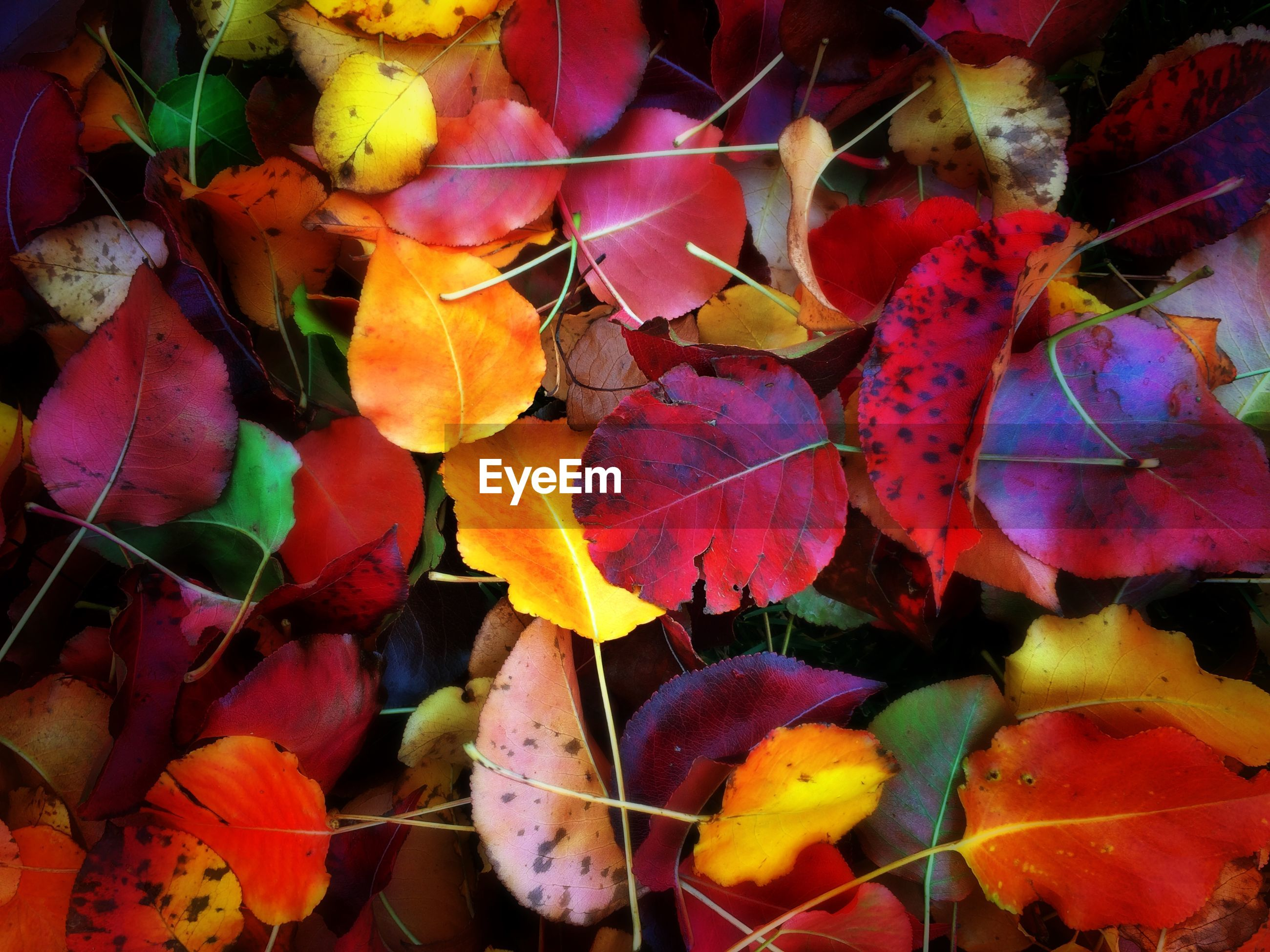 Full frame shot of falling autumn leaves