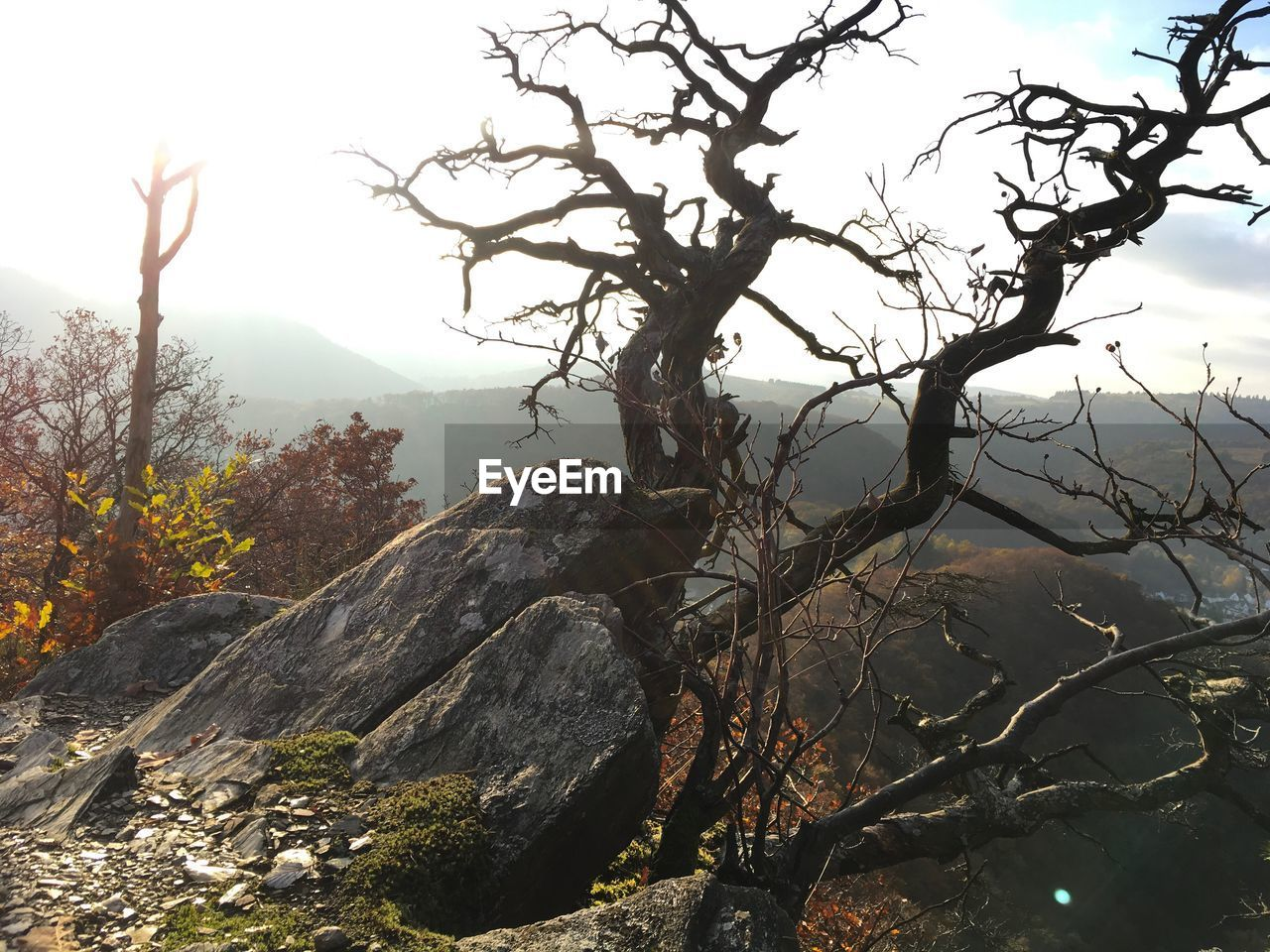 tree, nature, bare tree, beauty in nature, branch, outdoors, mountain, day, landscape, tranquility, no people, scenics, sky