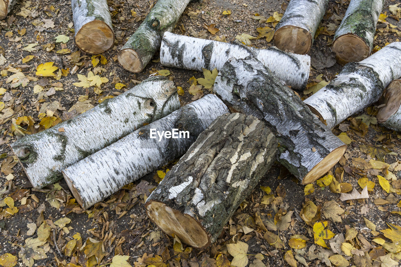 no people, day, nature, high angle view, plant part, outdoors, tree, leaf, log, close-up, wood - material, timber, cigarette, solid, cold temperature, wood, dirt, social issues, bad habit, water