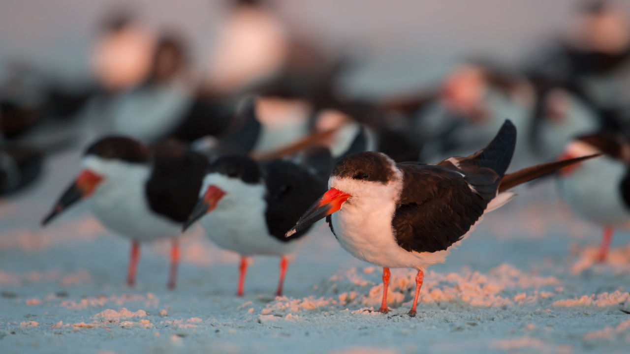 bird, animal themes, animal, animals in the wild, animal wildlife, vertebrate, group of animals, no people, nature, focus on foreground, day, selective focus, land, outdoors, winter, close-up, cold temperature, beach, snow, beauty in nature