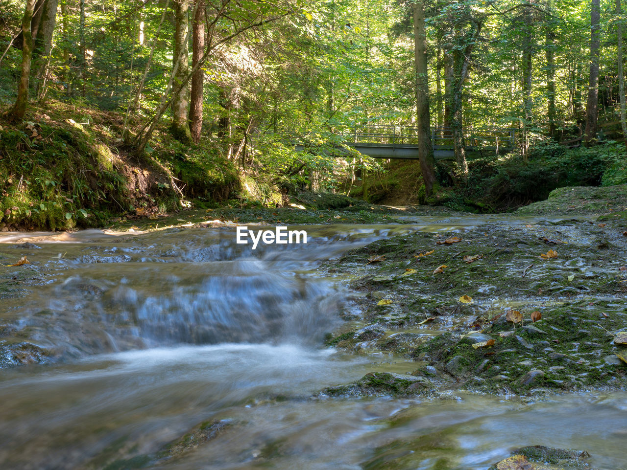 forest, tree, plant, water, land, flowing water, motion, beauty in nature, nature, day, no people, growth, scenics - nature, flowing, river, blurred motion, tranquility, non-urban scene, environment, outdoors, stream - flowing water, woodland, power in nature
