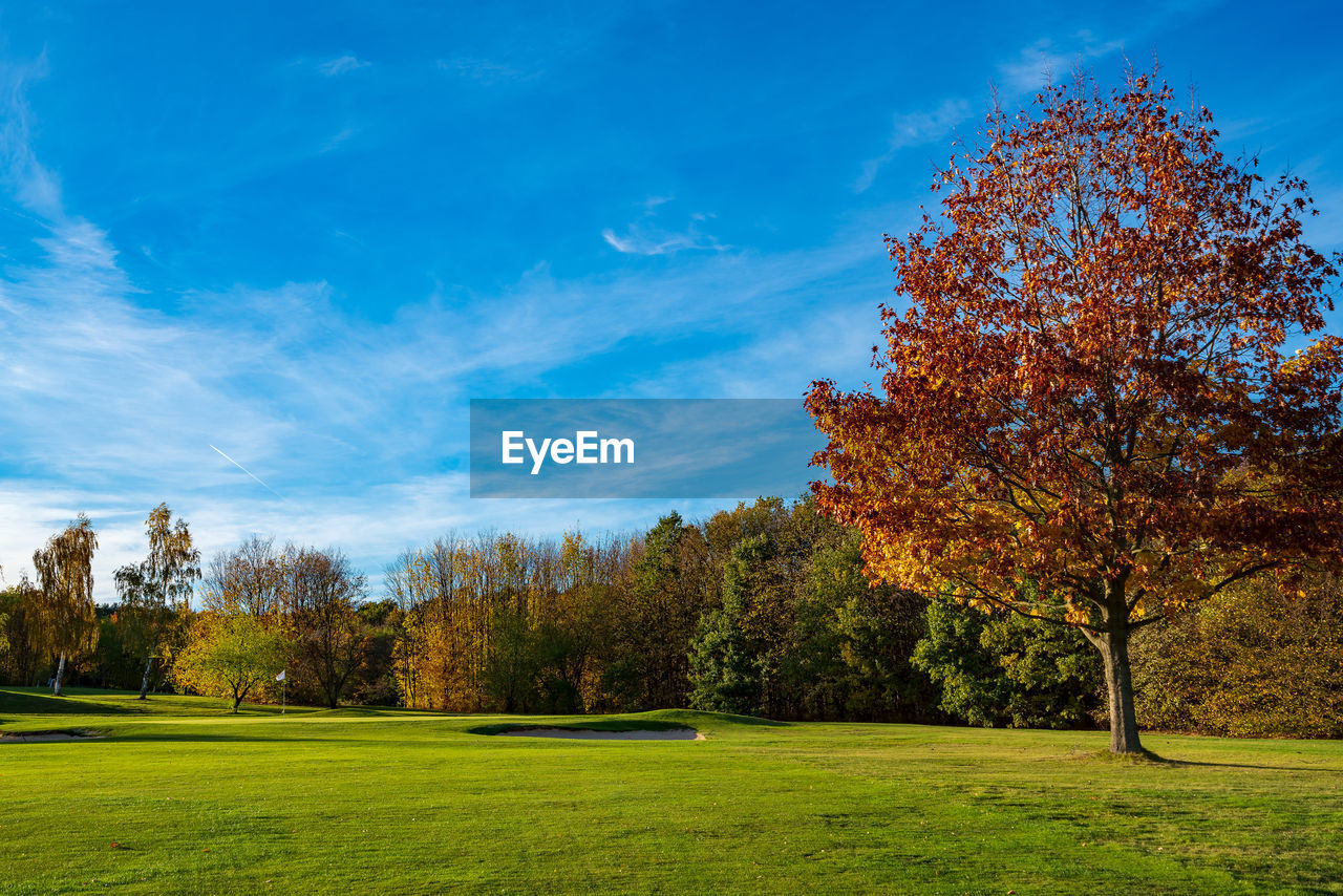 tree, plant, sky, beauty in nature, grass, green color, tranquility, scenics - nature, autumn, cloud - sky, tranquil scene, nature, land, growth, non-urban scene, landscape, field, no people, environment, change, outdoors
