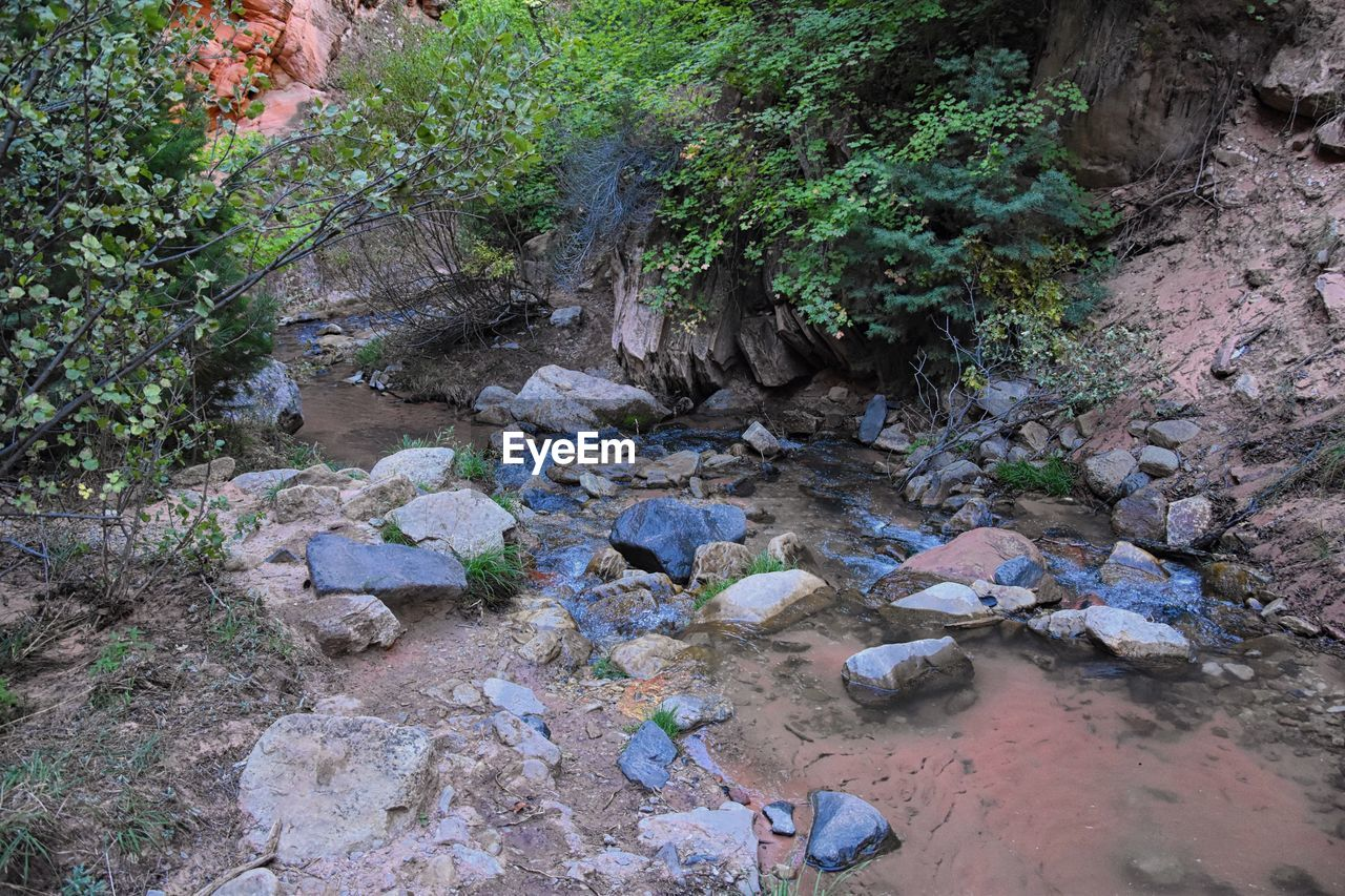 rock, solid, plant, rock - object, nature, water, day, tree, land, growth, no people, beauty in nature, forest, tranquility, high angle view, stream - flowing water, downloading, outdoors, flowing water, flowing, pollution