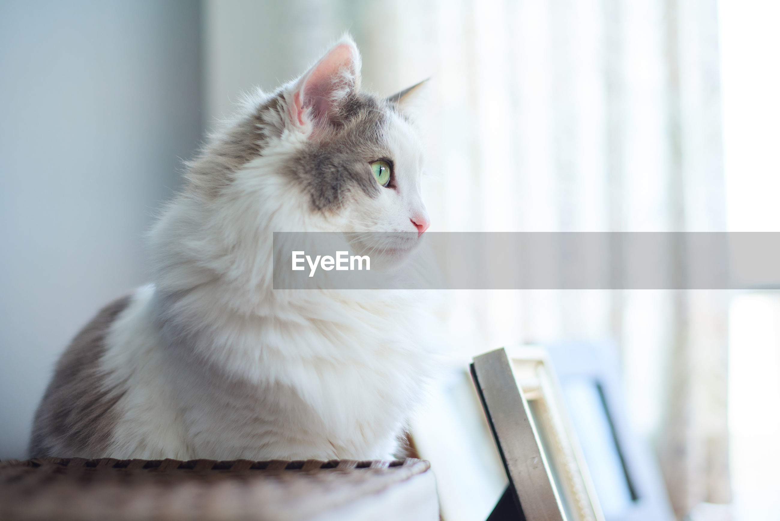 Close-up of a cat sitting on desk