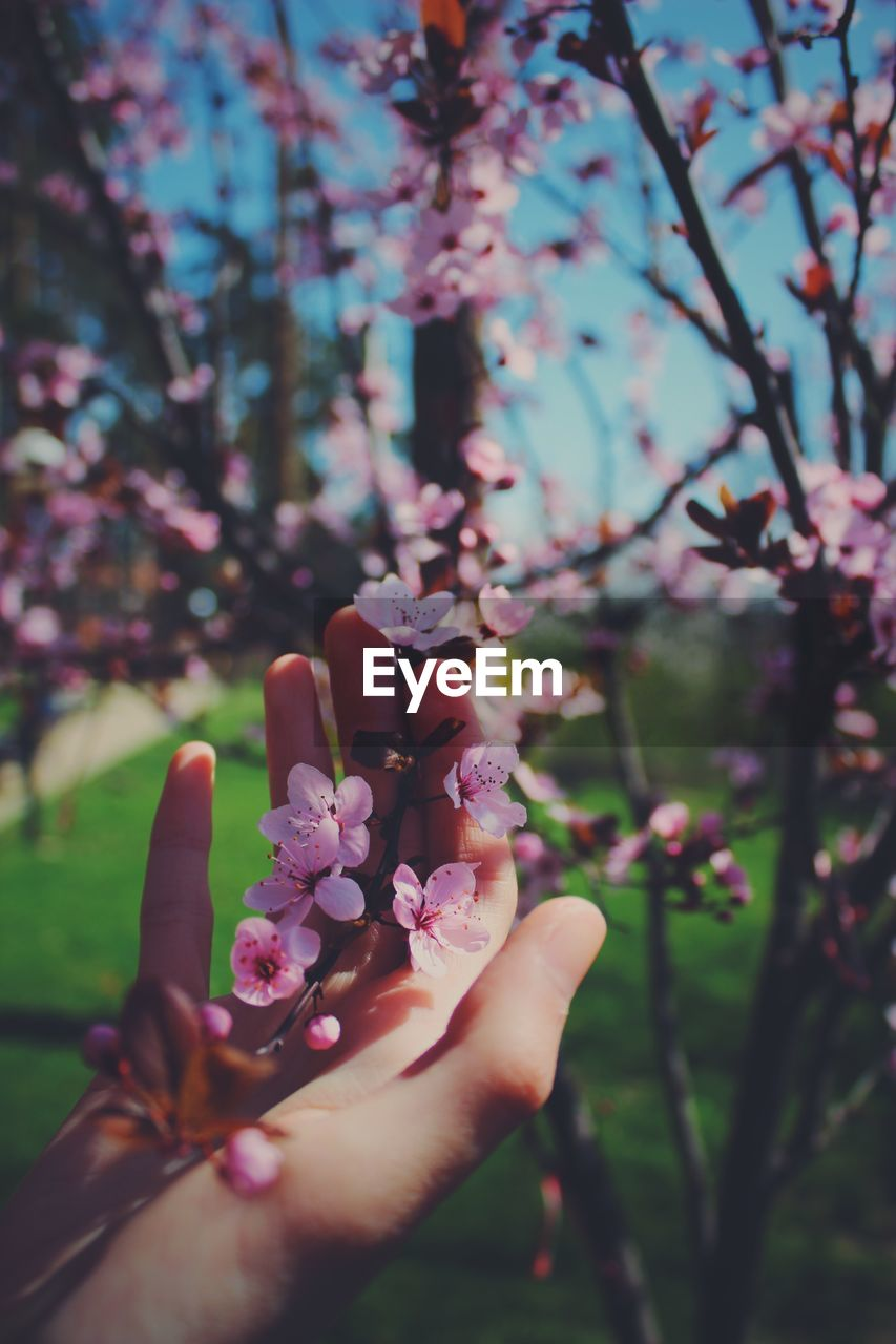 flowering plant, flower, plant, human hand, hand, pink color, freshness, nature, fragility, human body part, vulnerability, one person, day, beauty in nature, tree, growth, real people, close-up, women, human finger, outdoors, finger, body part, springtime, human limb, cherry blossom
