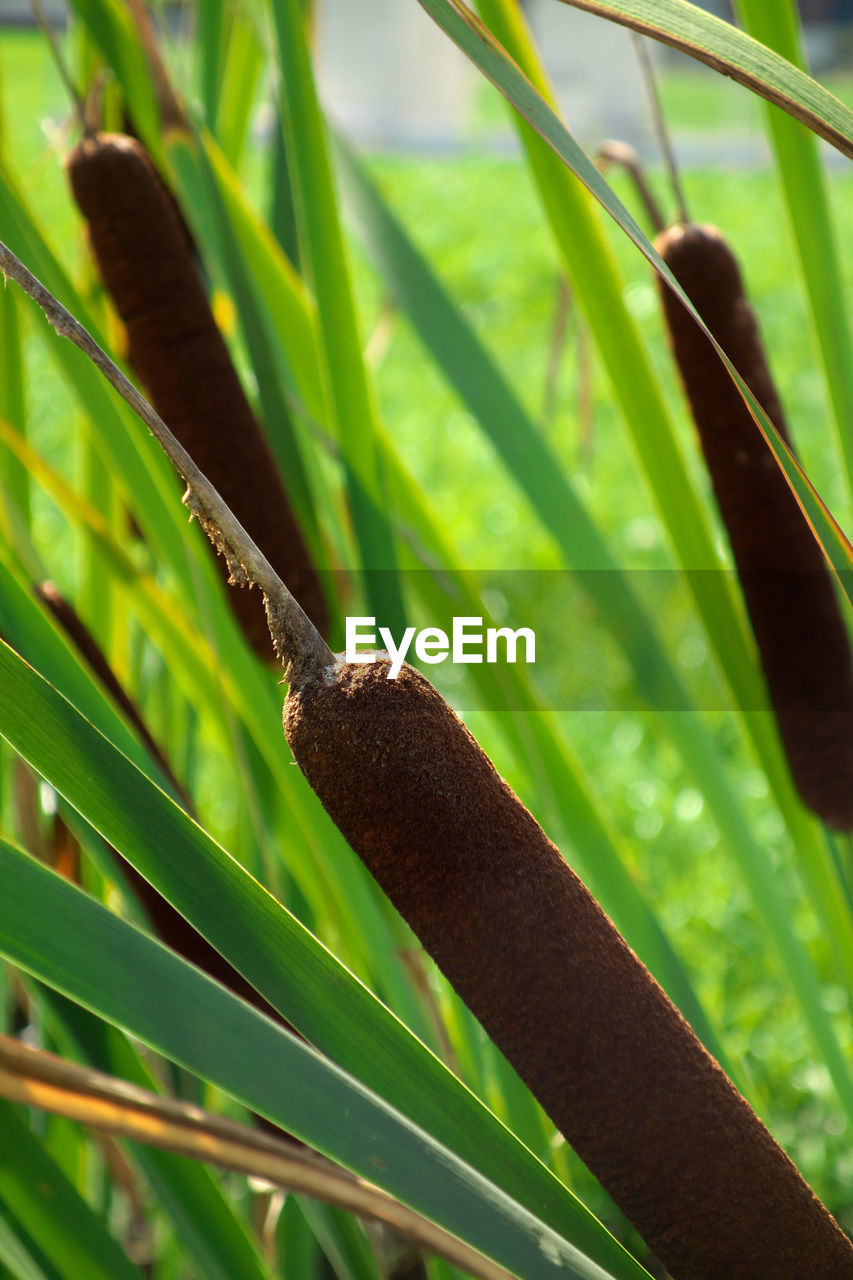 green color, growth, plant, plant part, close-up, leaf, nature, no people, day, beauty in nature, focus on foreground, brown, animal themes, outdoors, animal wildlife, animals in the wild, invertebrate, selective focus, one animal, tree, blade of grass