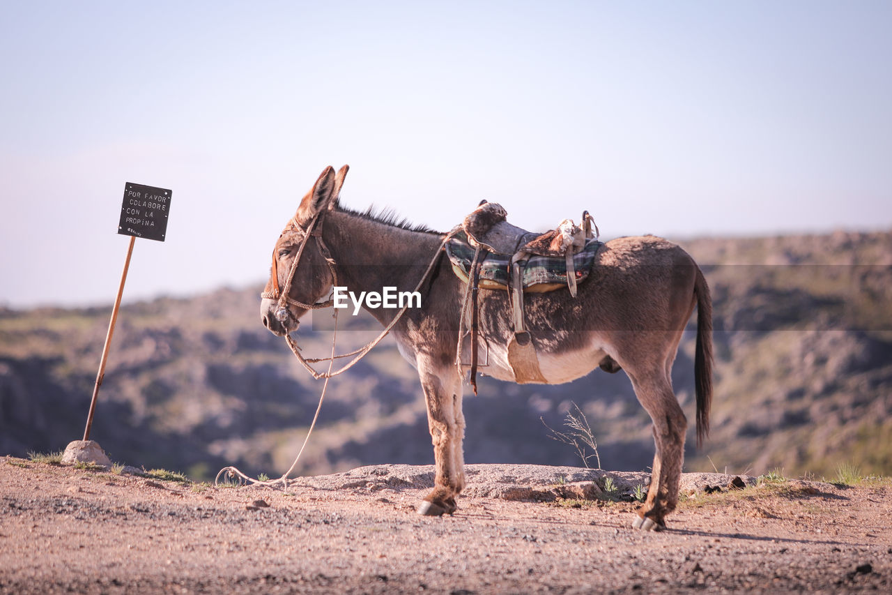 Side View Of Donkey Standing On Field Against Clear Sky