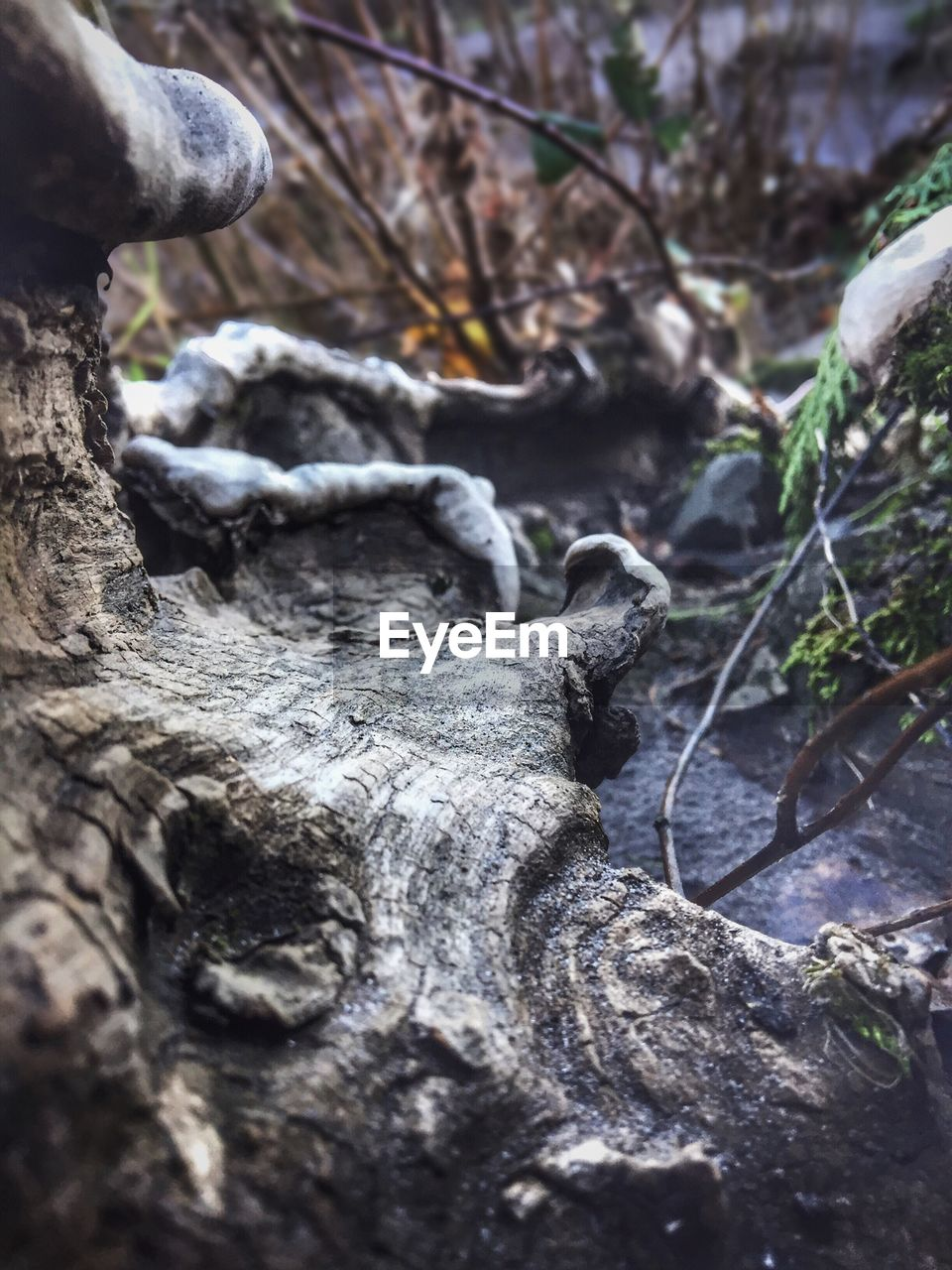 day, outdoors, tree trunk, textured, close-up, tree, no people, nature, beauty in nature, dead tree