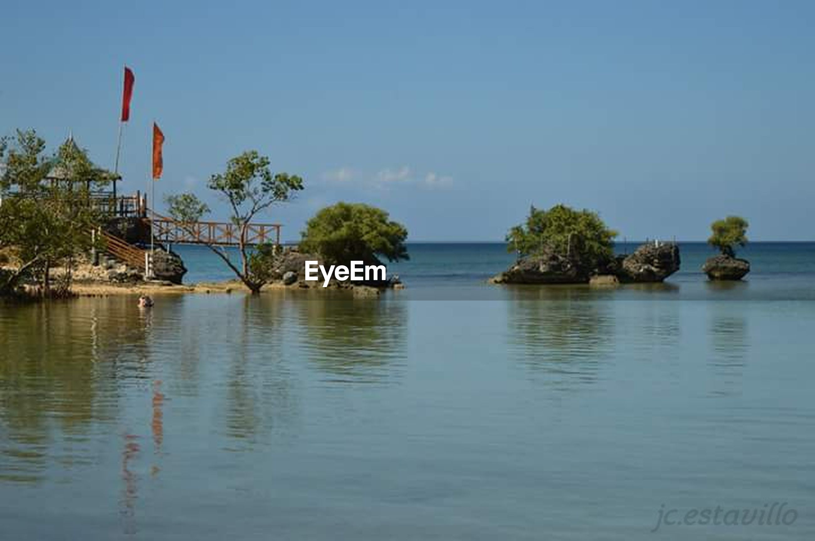 tree, water, blue, no people, sea, sky, nature, waterfront, outdoors, palm tree, tranquility, day, landscape, beach
